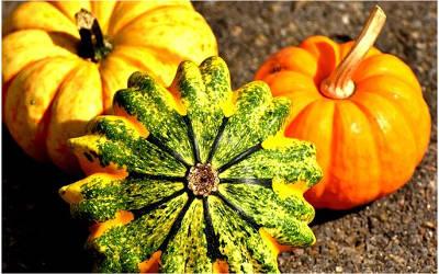 Chronique naturopathie: l'automne, ma saison préférée