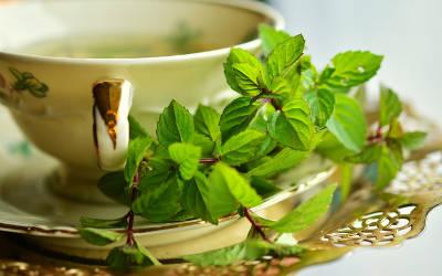 Saint-Antoine-sur-Richelieu: Découverte des thés