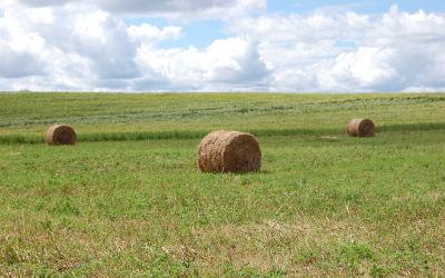 Une entente pour compenser les producteurs de foin durement affectés par la sécheresse de l'été 2018
