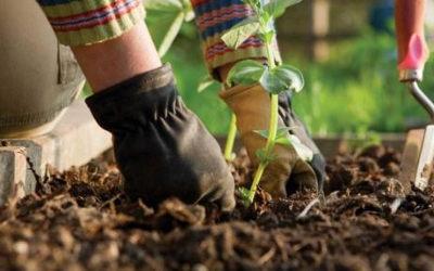 Contrecoeur: appel aux jardinières et jardiniers