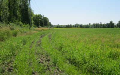 PurNat avec la Ville de Varennes et Solmax organisent une opération de nettoyage d'une terre agricole à Varennes
