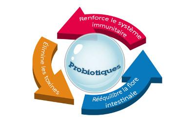 Chronique naturopathie: des probiotiques pour la vie