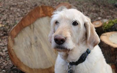 Réduction des services vétérinaires: l'aide des propriétaires d'animaux est demandée
