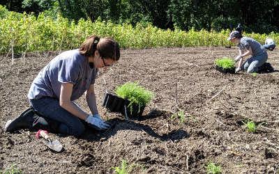 Conservation de la nature Canada: propulser les monarques une plantation à la fois