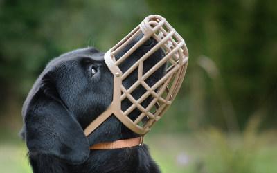 Verchères et Contrecoeur: de nouvelles obligations pour tous les propriétaires de chiens dès le 3 mars 2020