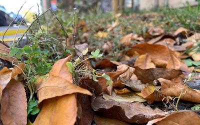 Cet automne, laissez des feuilles mortes faire leur travail!